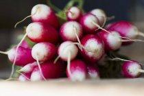 Mazzo di Ravanelli freschi — Foto stock