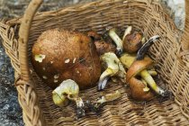 Fresh cutted ceps — Stock Photo