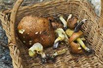 Свежие белые грибы резаным — стоковое фото