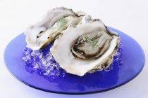 Huîtres fraîches sur assiette bleue — Photo de stock