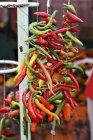 Guirnalda de chiles coloridos - foto de stock