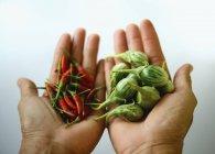 Руки проведення баклажани і перець чилі — стокове фото