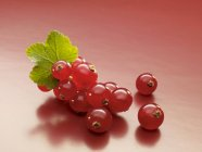 Ripe Redcurrants with leaf — Stock Photo