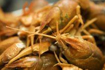 Closeup view of cooked crayfish heap — Stock Photo
