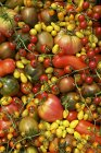 Organic colorful tomatoes — Stock Photo