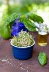 Vaso con i germogli freschi — Foto stock