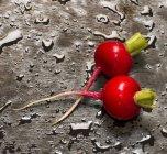 Ravanelli freschi maturi — Foto stock