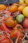 Frische bunte Tomaten — Stockfoto