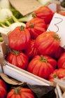 Fresh red Tomatoes — Stock Photo