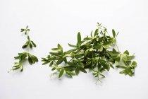 Woodruff зеленые ростки на белой поверхности — стоковое фото