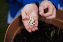 Semillas de girasol crudas - foto de stock