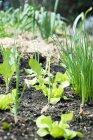 Cama vegetal en el jardín al aire libre durante el día - foto de stock
