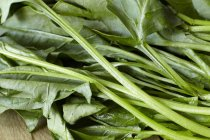 Fresh spinach leaves — Stock Photo
