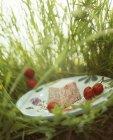 Terrina di carne nel prato — Foto stock