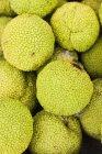 Osage Naranja frutas en montón - foto de stock