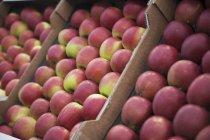 Mele rosse fresche in casse — Foto stock