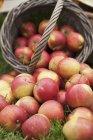 Frisch geerntete Äpfel — Stockfoto