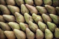 Fresh ripe pears — Stock Photo