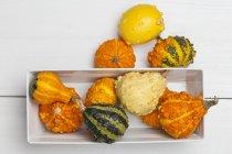 Zucca ornamentale fresco — Foto stock