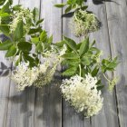 Closeup view of fresh elderflowers with leaves on rustic wooden surface — Stock Photo
