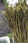 Wild green asparagus — Stock Photo