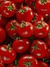 Червоний стиглих помідорів — стокове фото