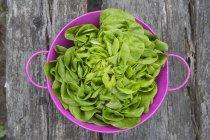 Fresh lettuce in purple plastic basket — Stock Photo
