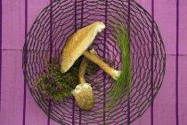Funghi ed erbe fresche dell'ombrellone — Foto stock