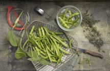 Bush fèves et thym — Photo de stock