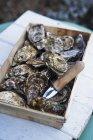 Vista del primo piano delle ostriche di Marennes cattura con coltello in cassa — Foto stock