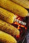 Жареные кукурузные початки — стоковое фото