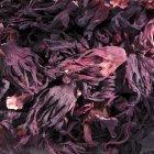 Vista de cerca de las flores secas de hibisco - foto de stock