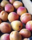 Cassa di albicocche fresche — Foto stock