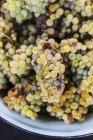 Ciotola di uva fresca raccolta — Foto stock