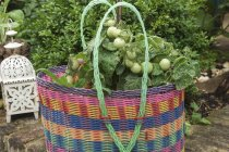 Tomato plants in a colourful plastic basket outside on a stone wall — Stock Photo