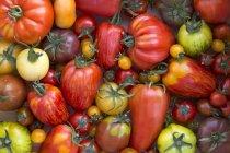Various Heirloom tomatoes — Stock Photo