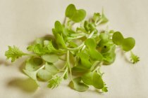 Foglie fresche wasabina posa su superficie bianca — Foto stock