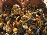 Cestini di zucca ornamentale — Foto stock