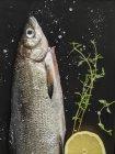 Fresh whiting fish with lemon — Stock Photo