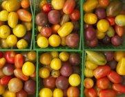 Varios tomates reliquia mini - foto de stock