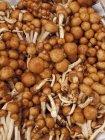 Champignons sauvages nameko — Photo de stock