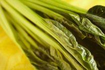 Листья зеленого сырья tatsoi на размытый фон — стоковое фото