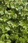 Вид свежих зеленых трав на солнце — стоковое фото