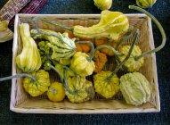 Zucca fresca raccolti in cestino — Foto stock