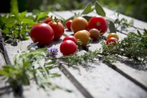Fresh picked Various tomatoes — Stock Photo