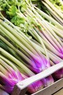 Pink celery in a crate at a market stall outdoors — Stock Photo