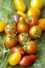 Tomates cerises fraîches cueillies — Photo de stock