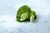 Vista del primo piano dei coni di luppolo con foglie sulla superficie bianca shabby — Foto stock