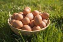 Oeufs de poulet brun dans le panier — Photo de stock