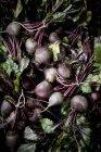 Пачки свежих свеклы с листьями — стоковое фото